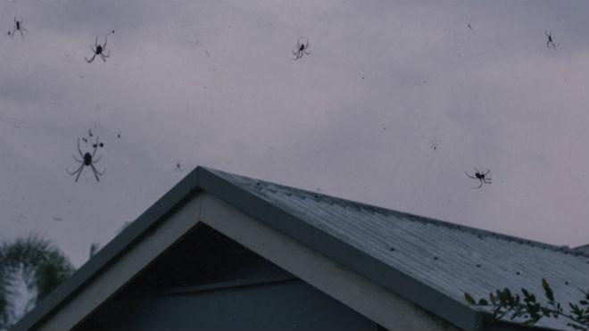 Из пауков