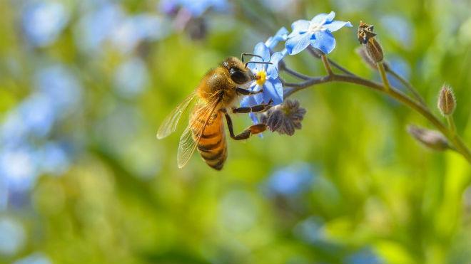 Опыление насекомыми