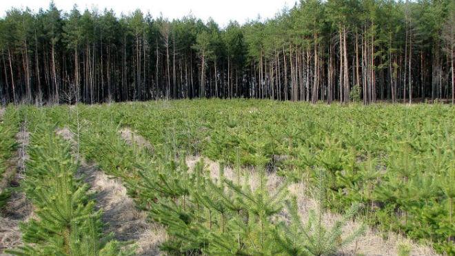 Посадка лесов