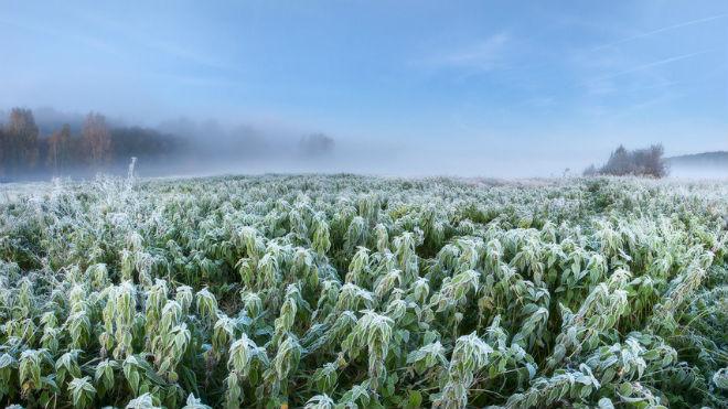 Туман над полем