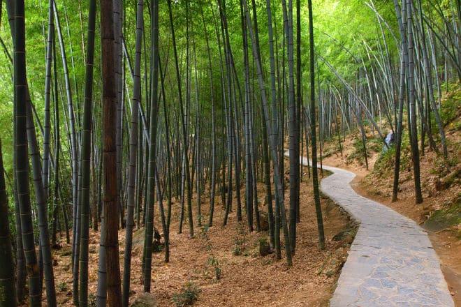 Лощина черного бамбука (КНР)