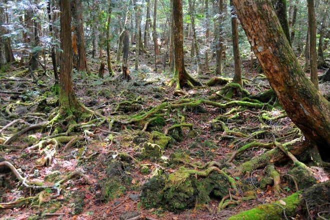 Что такое лес Аокигахара?