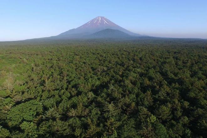 Лес Аокигахара с высоты птичьего полета