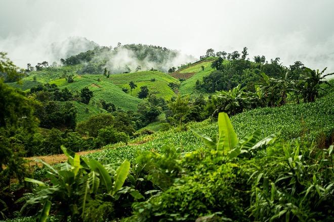 Растения Тайланда