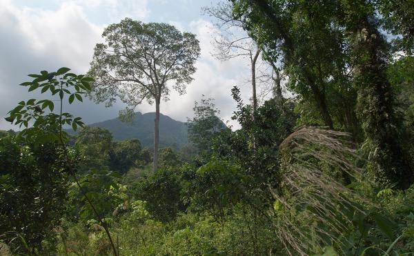 Тропический лес в центре острова : Vyacheslav Argenberg