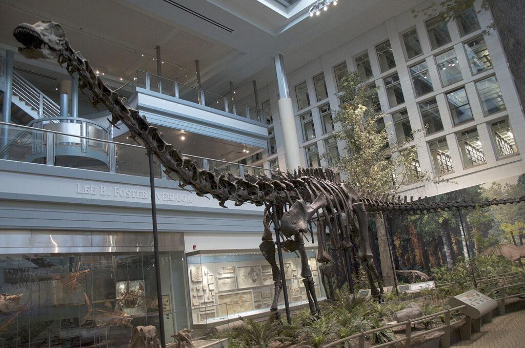 Скелет диплодока Карнеги в Музее естественной истории Карнеги